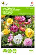Tom Thumb - Strawflower seeds