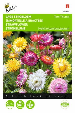 Tom Thumb - Strawflower seeds