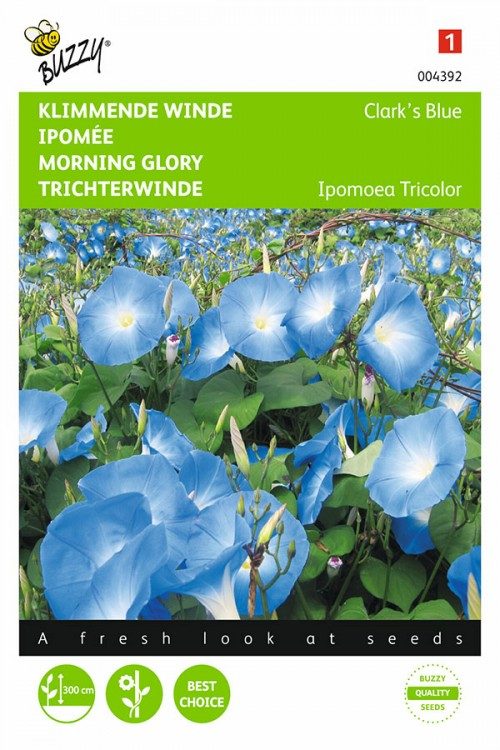 Clarks Blue Morning Glory - Ipomoea seeds