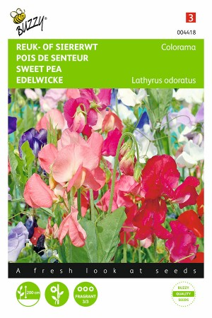 Colorama Sweet pea Lathyrus...