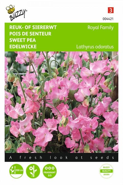 Royal Family Pink Sweet pea Lathyrus seeds