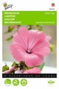 Silver Cup Royal Mallow seeds