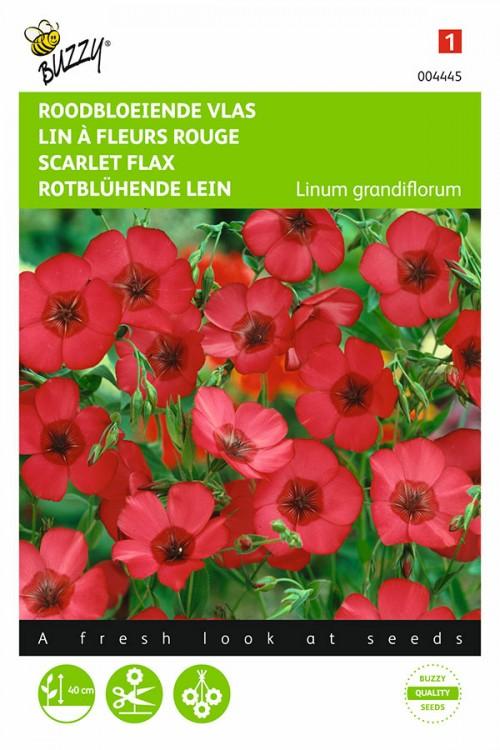 Roodbloeiend Vlas - Linum zaden