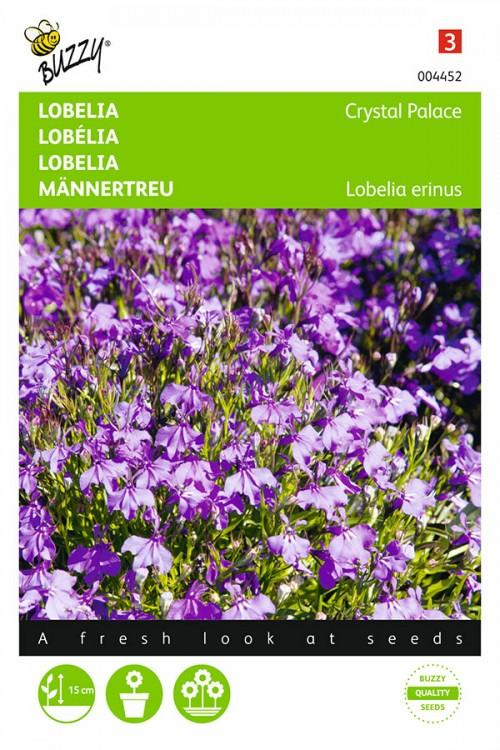 Crystal Palace Lobelia seeds
