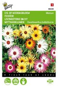 Mixture Livingstone Daisy - Dorotheanthus seeds