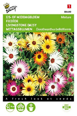 Mixture Livingstone Daisy -...