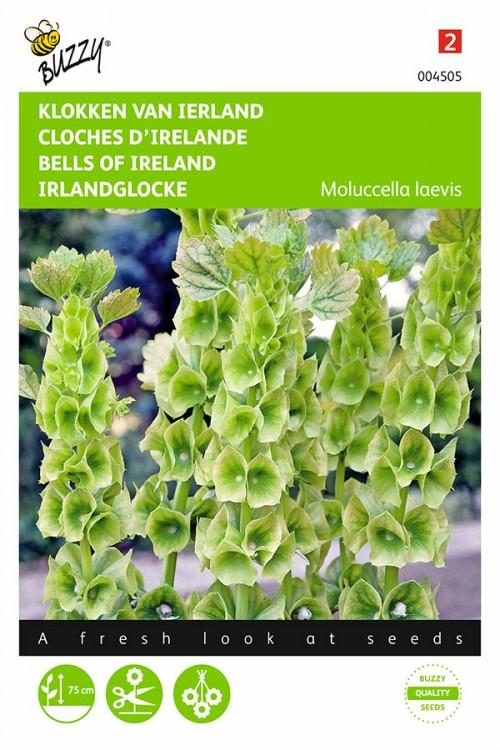 Klokken van Ierland Molucella zaden