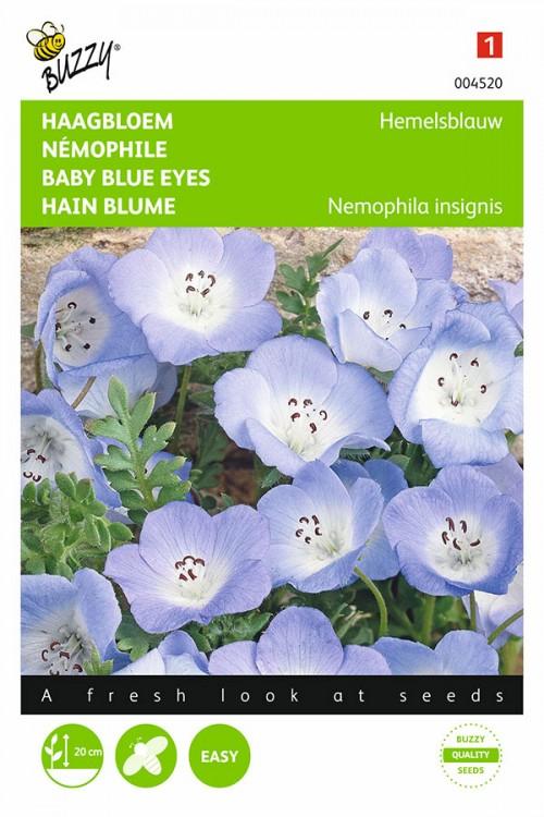 Blue Heaven Baby-Blue-Eyes Nemophila seeds