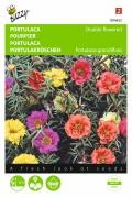 Double flower Garden Portulaca seeds