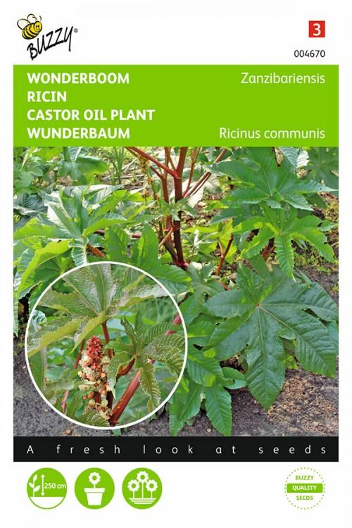 Zanzibarensis Castor Oil Plant Ricinus seeds