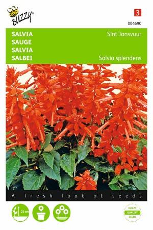 Sint John's Fire - Salvia splendens seeds