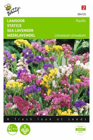 Pacific Lamsoor - Limonium zaden