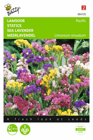 Pacific Statice - Sea lavender seeds