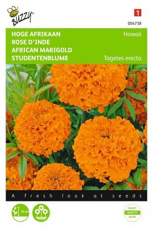 Hawaii African Marigold...