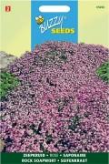 Rock Saopwort (Saponaria) Pink