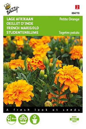 Petite Orange French Marigold Tagetes seeds
