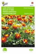 Petite Harmony French Marigold Tagetes seeds