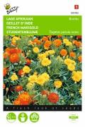 Bonita French Marigold Tagetes seeds