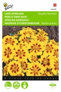 Naughty Marietta French Marigold Tagetes seeds