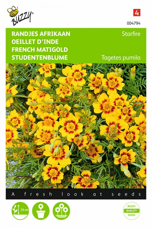 Starfire African Marigold Tagetes zaden