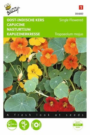 Climbing Nasturtium seeds