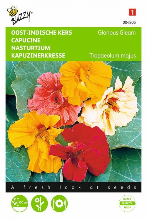 Glorious Gleam Nasturtium seeds