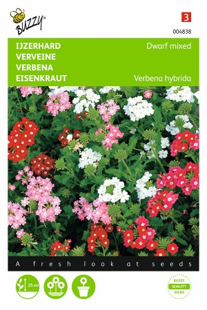 Dwarf Vervain - Verbena seeds