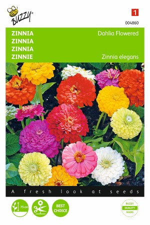 Dahlia Flowered Zinnia seeds