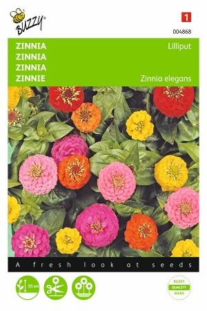 Lilliput Zinnia