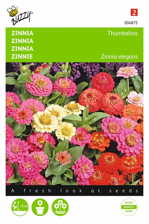 Lage Thumbelina Mini Zinnia zaden