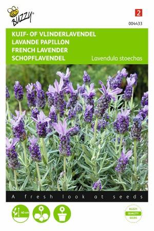 Franse Lavendel -...