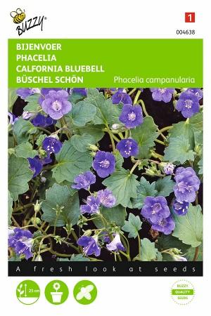 Phacelia Campanularia - Bee...