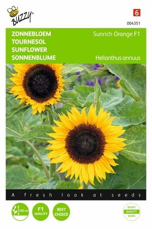 Sunrich Orange F1 Sunflower...