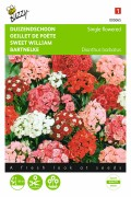 Sweet William single flowered mixed