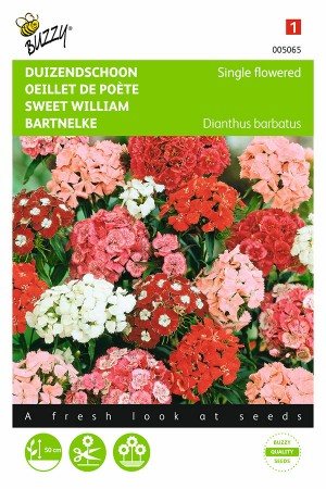 Single flowered - Sweet William seeds