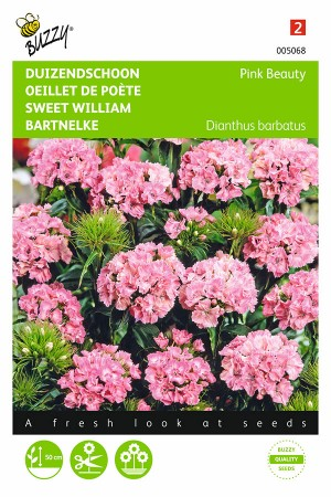Pink Beauty - Sweet William...