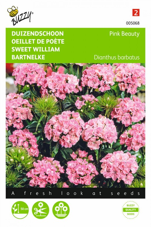 Pink Beauty - Sweet William seeds