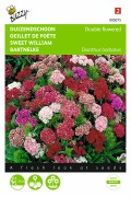 Dwarf double flowered - Sweet William seeds