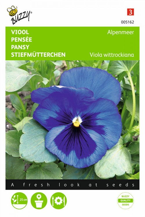 Swiss Giant Blue with Blotch - Pansy seeds