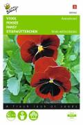 Scarlet red blotch - Pansy seeds