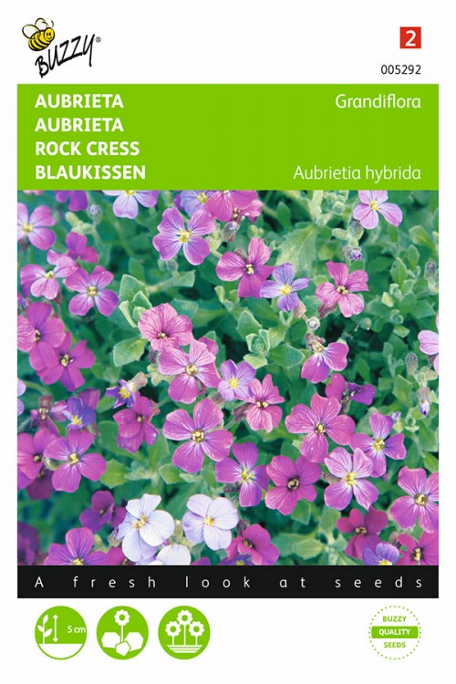 Grandiflora Aubrieta zaden