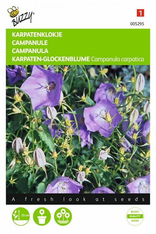 Campanula Blue Carpatica