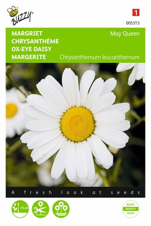 May Queen Ox-eye Daisy...