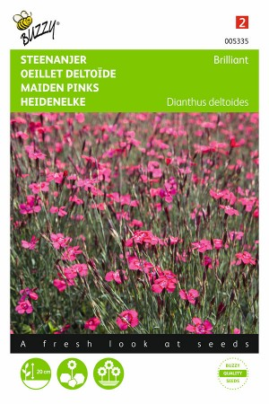 Brilliant Dianthus - Maiden Pink seeds
