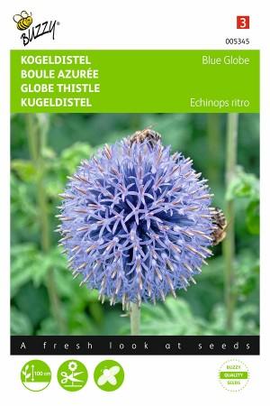 Blue Globe Kogeldistel -...
