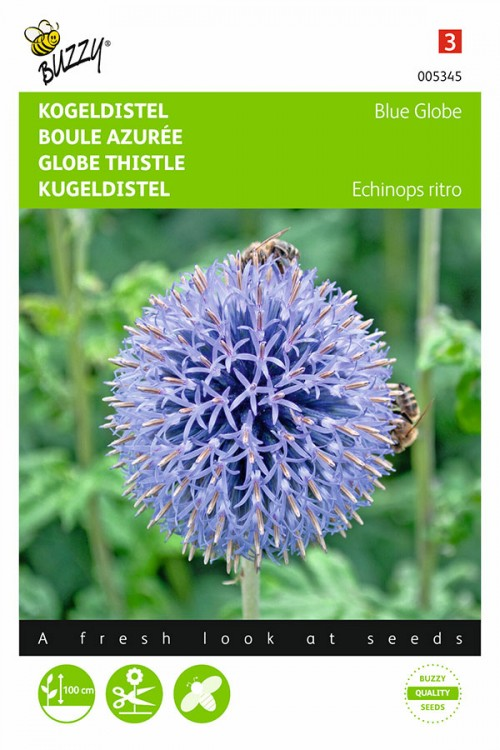 Blue Globe Kogeldistel - Echinops zaden