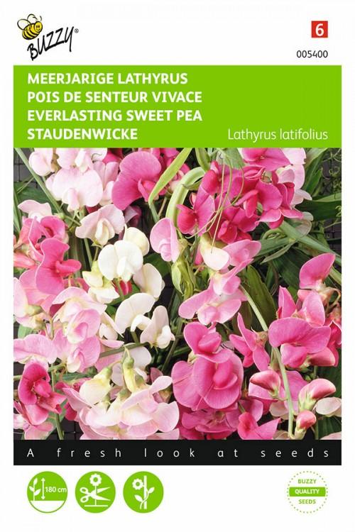 Meerjarige Siererwten Lathyrus latifolius zaden