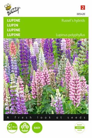Russells Hybrids - Lupine...