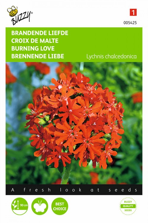 Maltese Cross - Burning Love seeds