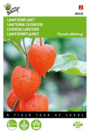 Chinese Lantern - Physalis seeds